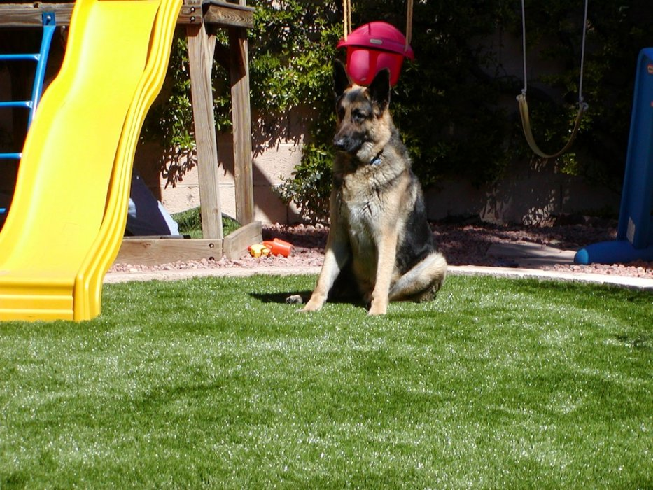 German Shepherd sits on turf near backyard playground equipment